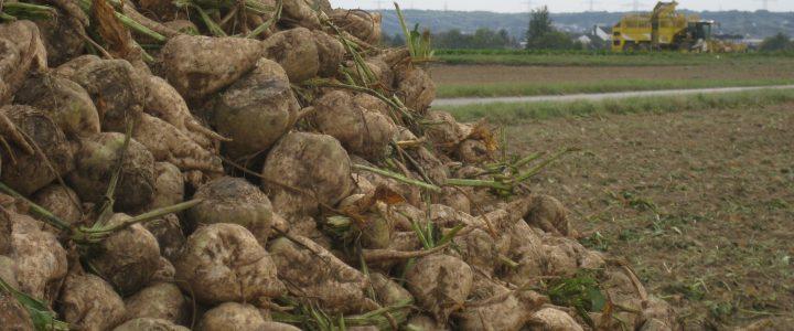 Landwirtschaft auf dem Meßdorfer Feld